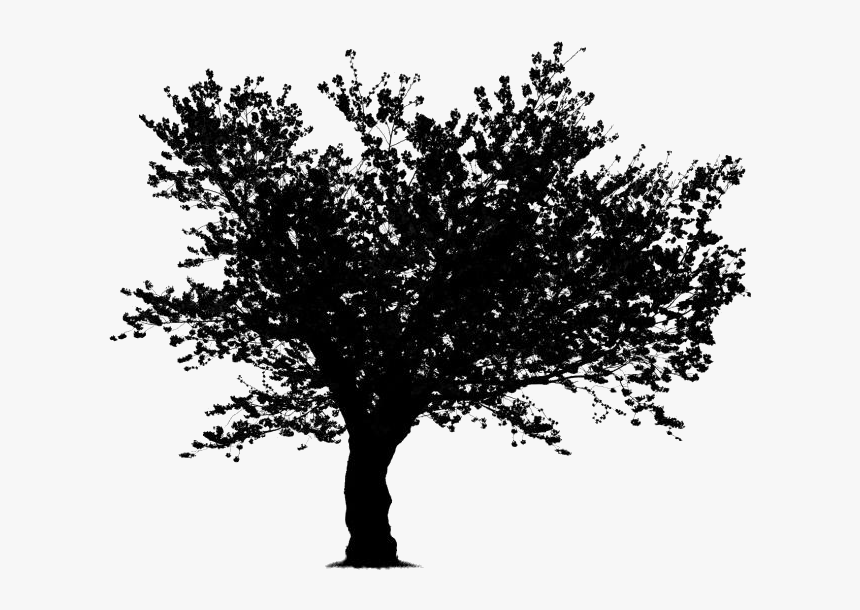 Japanese Cherry Blossom Tree Png Cartoon Tree Clipart Black And White No Background Transparent Png Transparent Png Image Pngitem 50 high quality collection of cartoon clipart black and white by clipartmag. japanese cherry blossom tree png
