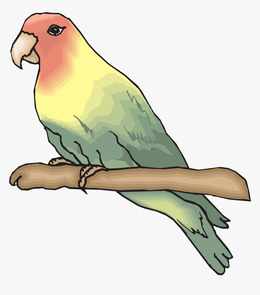 Sketsa Gambar Burung Lovebird HD Download Transparent