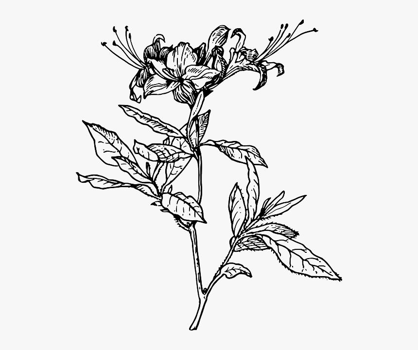 Outline Flower Azalea Plant Coloring Short Tattoo Azalea