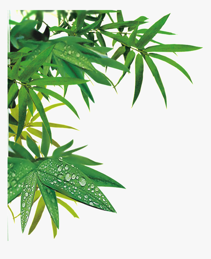 Realistic Bamboo Leaf Design Transparent Decorative Bamboo Png Transparent Png Download Transparent Png Image Pngitem