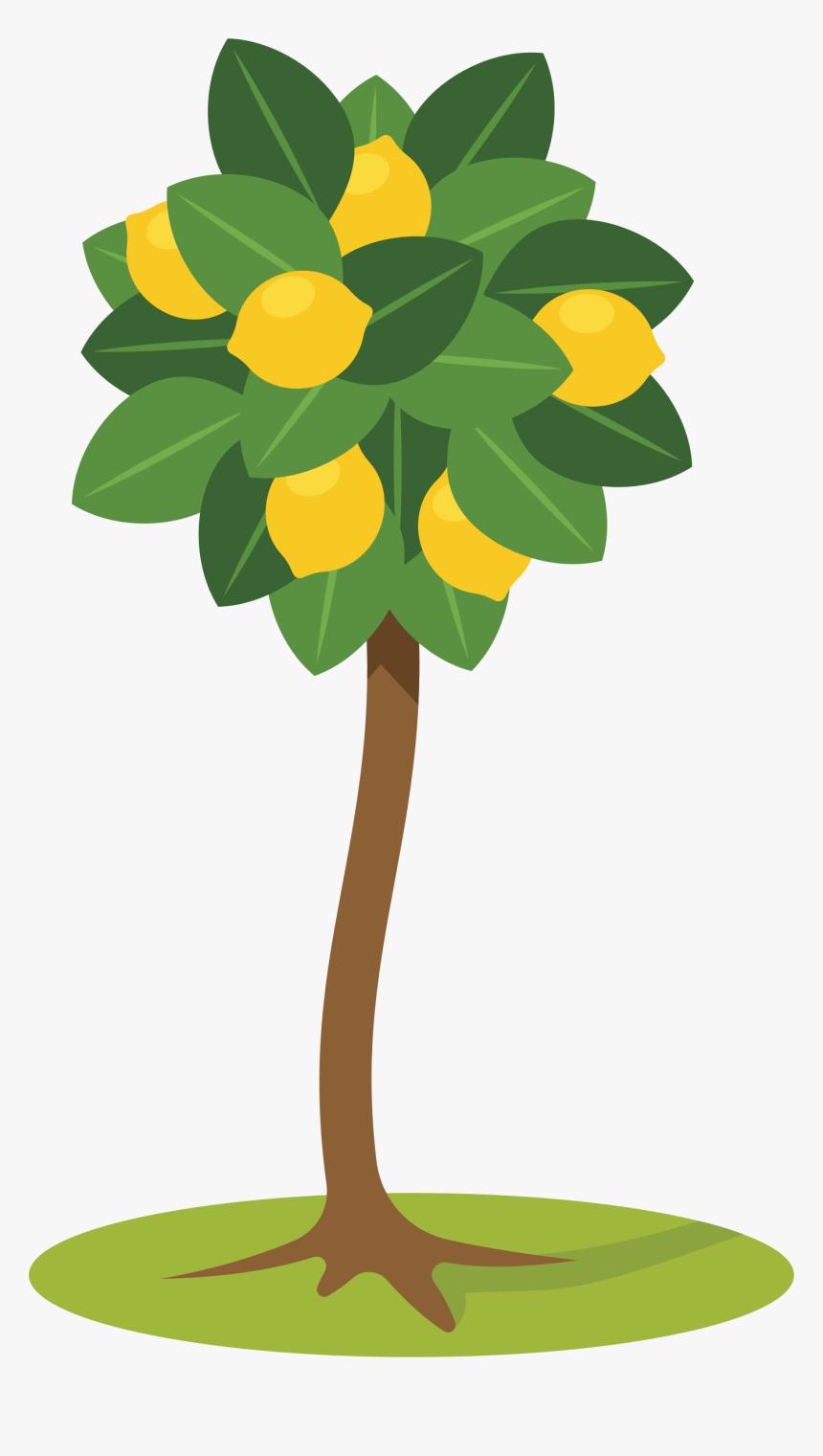 расскажем, картинка лимонное дерево распечатать друг, чего тебе