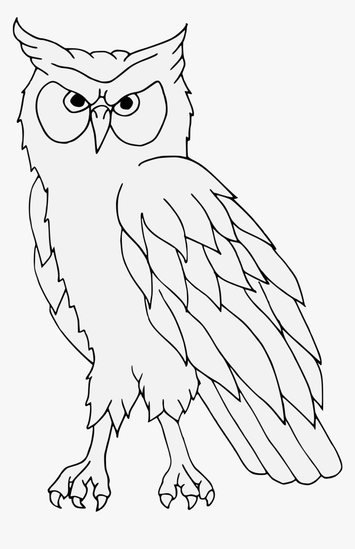 Burung Hantu Hitam Putih Hd Png Download Transparent Png Image
