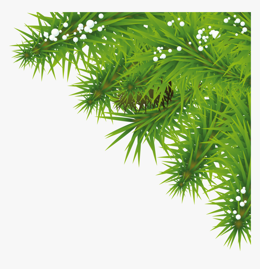 Transparent Christmas Tree Transparent Png Tree Png Background Hd Png Download Transparent Png Image Pngitem The christmas tree is a tradition that we celebrate in every christmas day. transparent christmas tree transparent