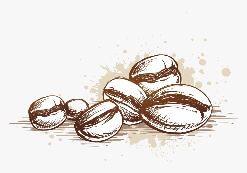 beans vector coffee seed coffee bean vector png transparent png transparent png image pngitem coffee bean vector png transparent png