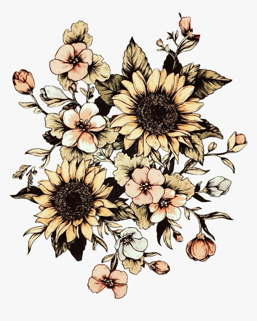 Transparent Vintage Sunflower Clipart - Sunflower Drawing ...
