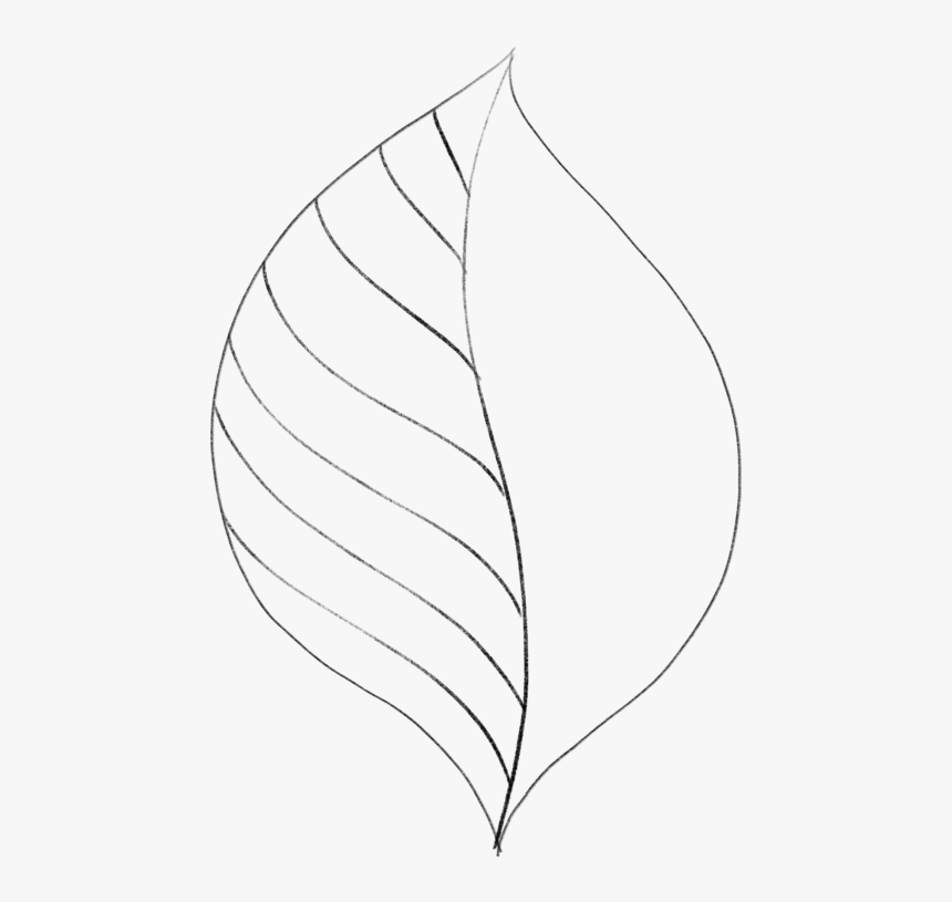 Transparent Leaves Drawing Png Simple Leaf Transparent Background Png Download Transparent Png Image Pngitem Each brush has a resolution of around 2000 pixels, which. transparent leaves drawing png simple