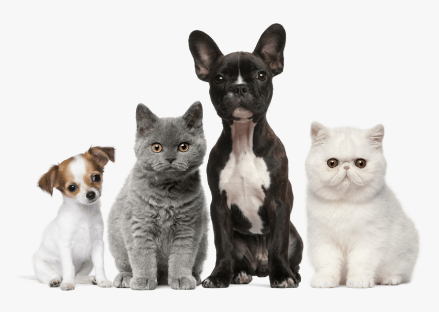 Dog Cat Puppy Kitten Pet Cats Dogs Hd Png Download Transparent Png Image Pngitem