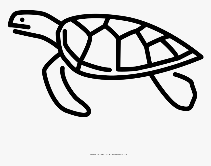 - Sea Turtle Coloring Page - Coloring Book, HD Png Download , Transparent Png  Image - PNGitem
