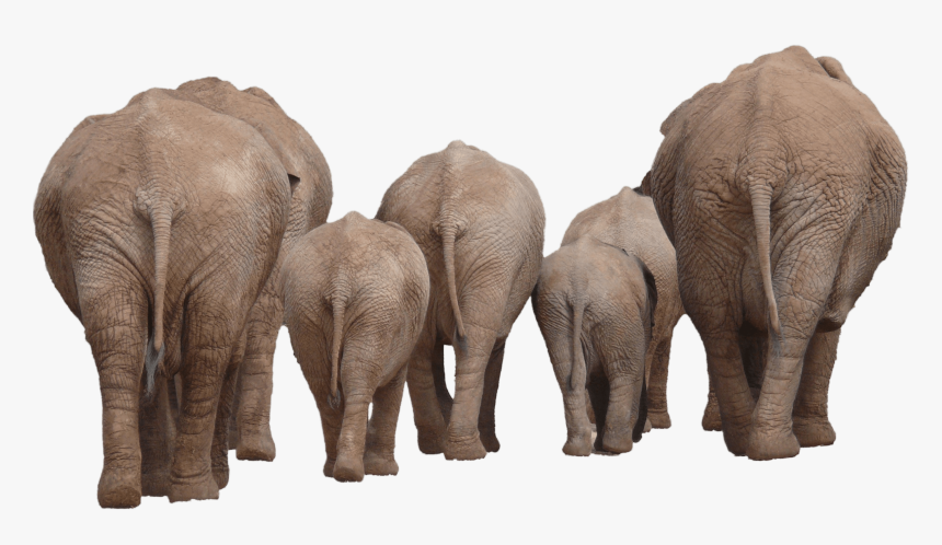 Elephants Group Back Transparent Png Elephant Group Png Png Download Transparent Png Image Pngitem Elephant and rabbit , elephant star rabbit illustration, elephants and rabbits stars transparent background png clipart. transparent png elephant group png