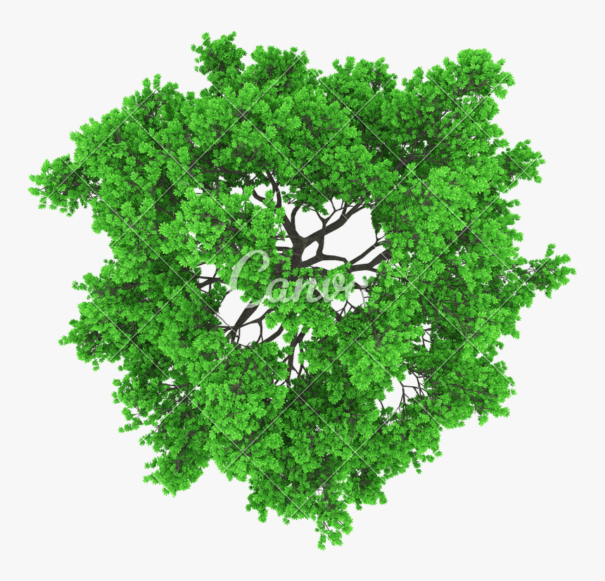 aerial tree png transparent tree aerial view png - vector tree top view png