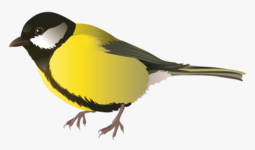 Cute Bird Transparent Image Transparent Background Clipart Birds Hd Png Download Transparent Png Image Pngitem