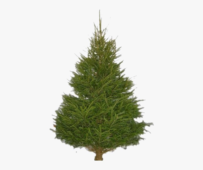 Fir Tree Png Images Asda Real Christmas Tree Transparent Png Transparent Png Image Pngitem This tree is hollow inside. fir tree png images asda real