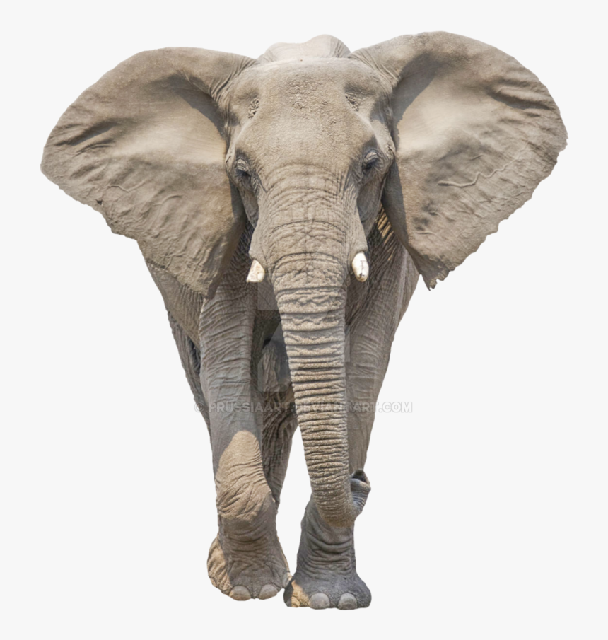 Transparent Elephant Background Elephant Png Png Download Transparent Png Image Pngitem Find images of elephant png. png download transparent png