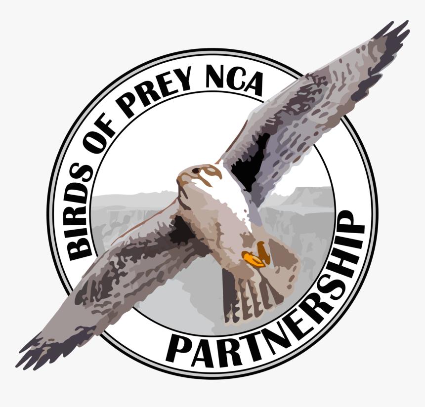 Free Raptor Bird Png Birds Of Prey Nca Partnership Transparent Png Transparent Png Image Pngitem
