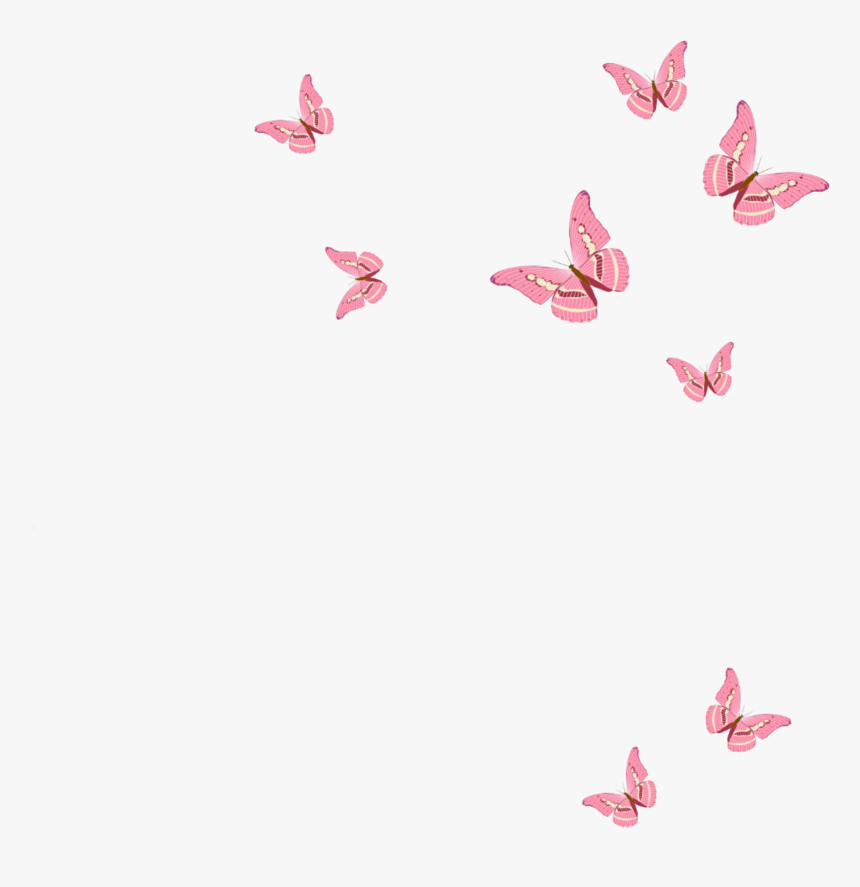 Butterfly Png Light Pink | Free PNG and Transparent Images