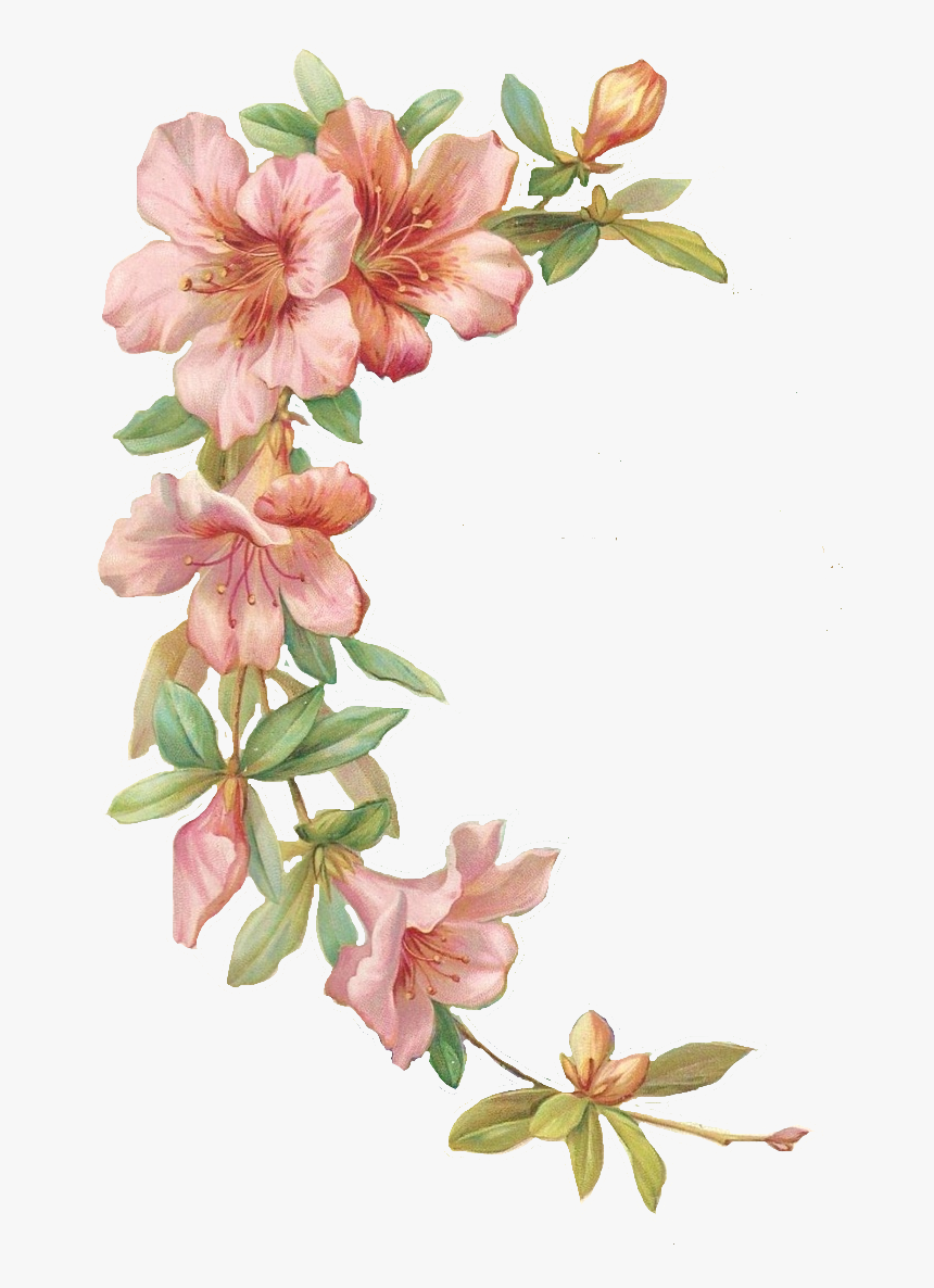 Flower Illustration Transparent Background Hd Png Download Transparent Png Image Pngitem