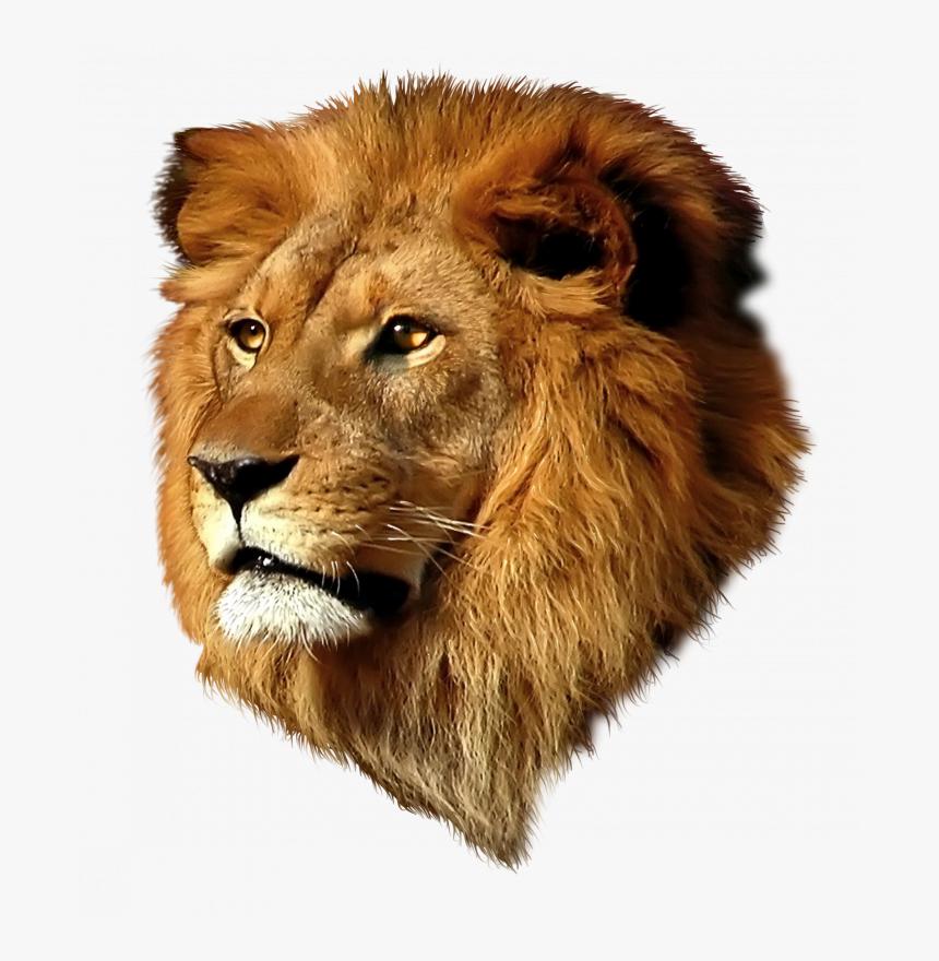 Tete De Lion Quotes Never Above You Never Below You Hd Png Download Transparent Png Image Pngitem