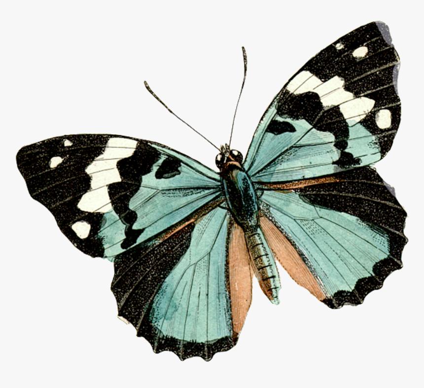Aesthetic Design Aesthetic Butterfly Blue Butterfly ...