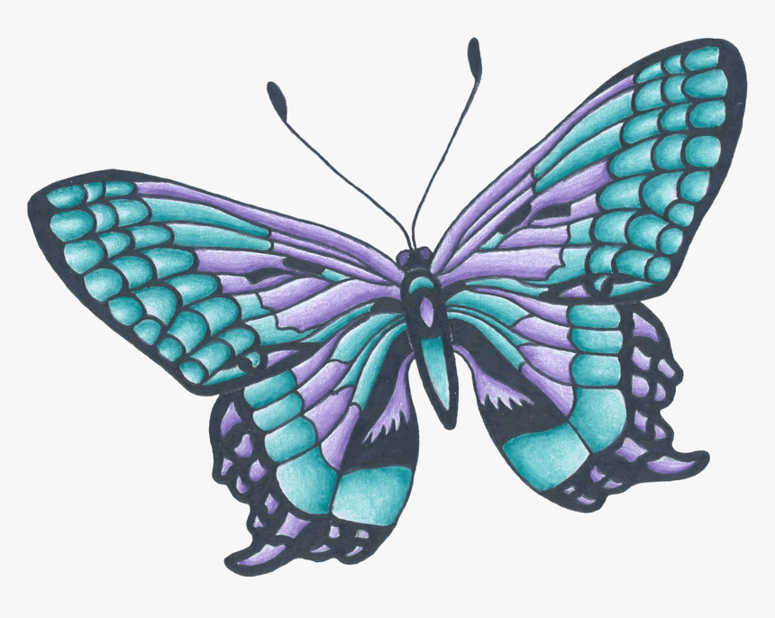 Drawing Butterflies Color Butterfly Drawing With Color Hd Png Download Transparent Png Image Pngitem