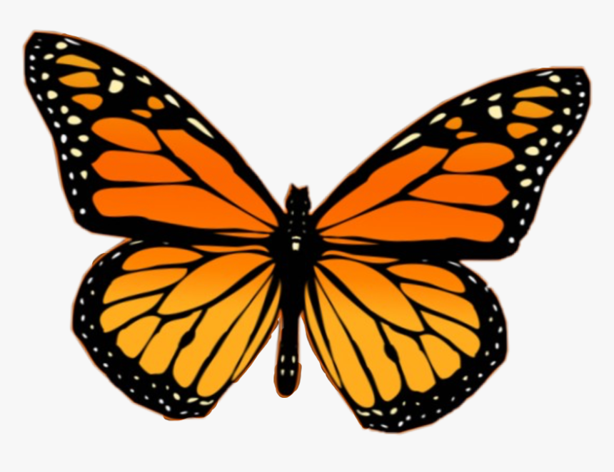 Monarch Butterfly Aesthetic Painting | aesthetic tumblr