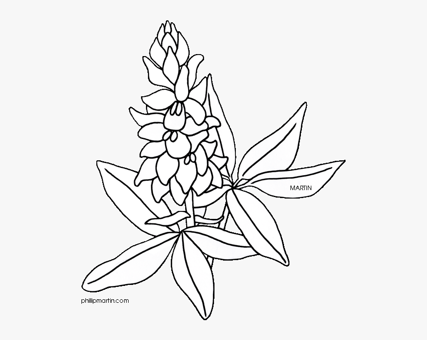 Flower Clipart Coloring Page Png Freeuse Bluebonnet Drawing