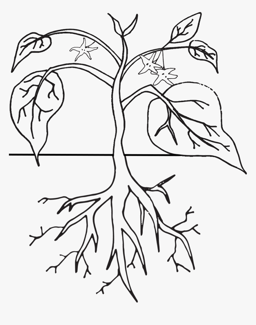 - Png Black And White Download Click On Images To Download - Plants