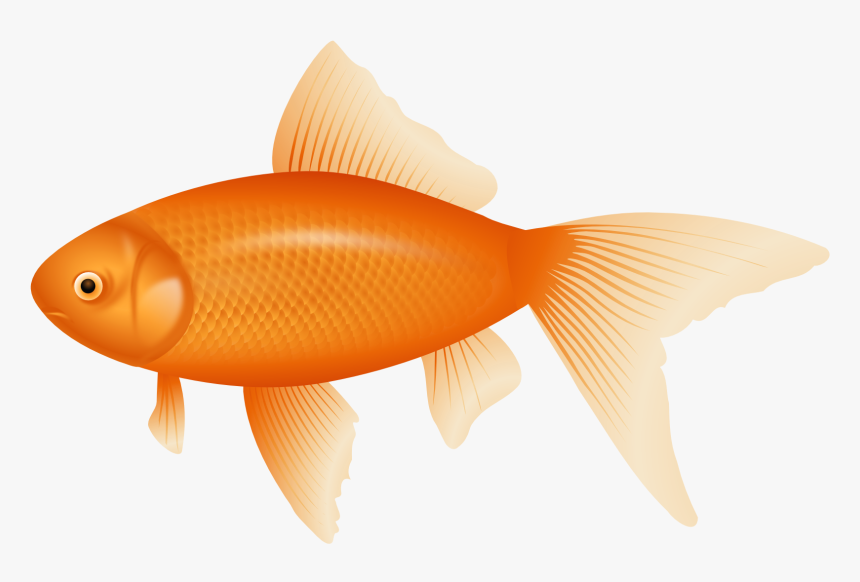 Orange Fish Png Clipart Transparent Background Fish Clipart Png Download Transparent Png Image Pngitem