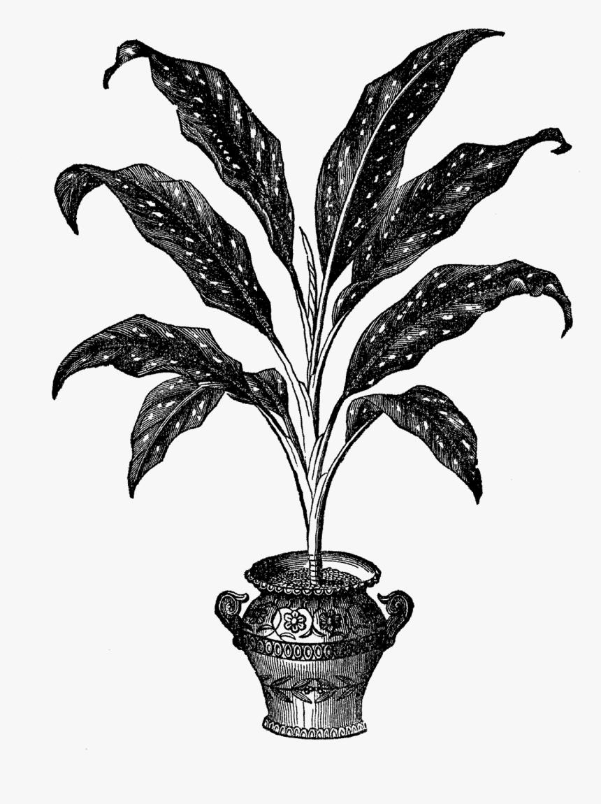 Plant Illustration Botanical Image Digital House Plant Illustration Hd Png Download Transparent Png Image Pngitem