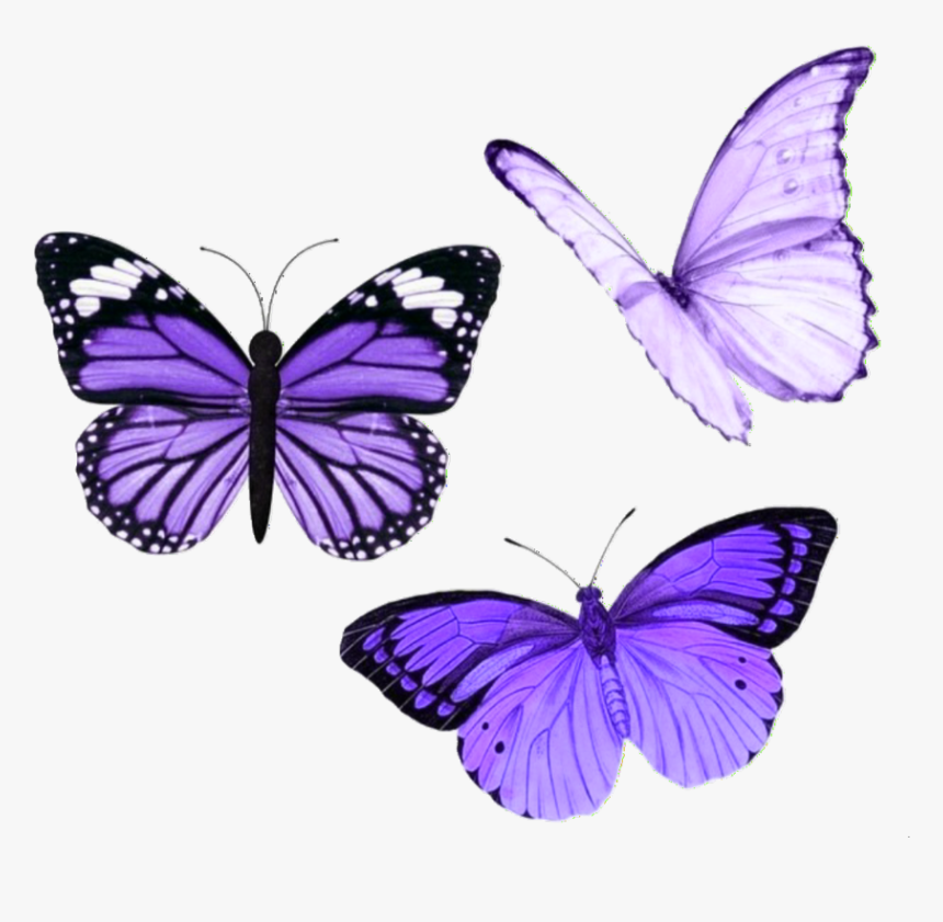 520 5202898 butterfly butterflies purple aesthetic tumblr purple aesthetic stickers