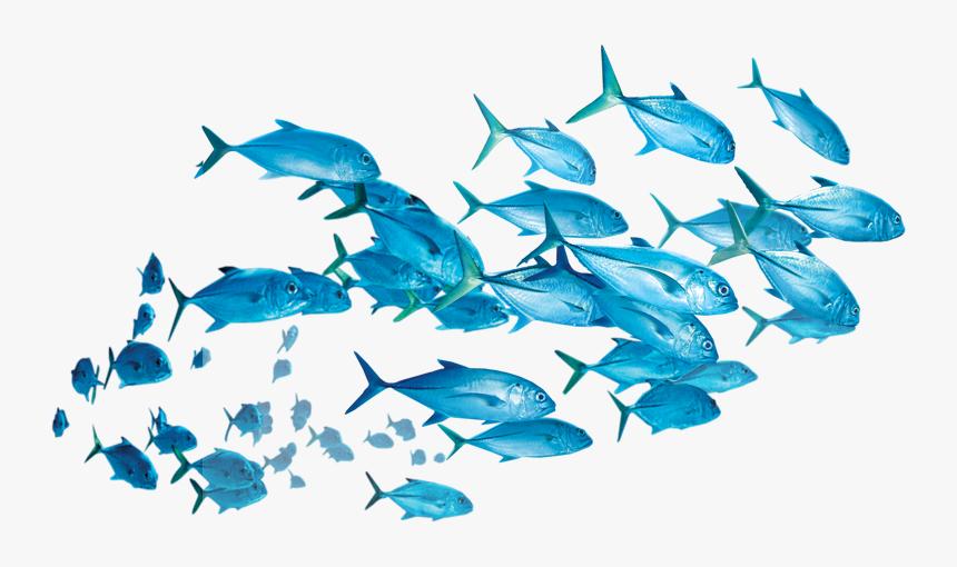 Fish School Of Fish Transparent Background Hd Png Download Transparent Png Image Pngitem