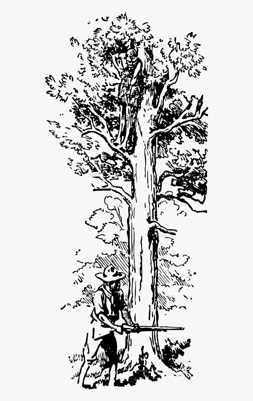 Transparent Big Tree Pohon Gambar Ilustrasi Tumbuhan