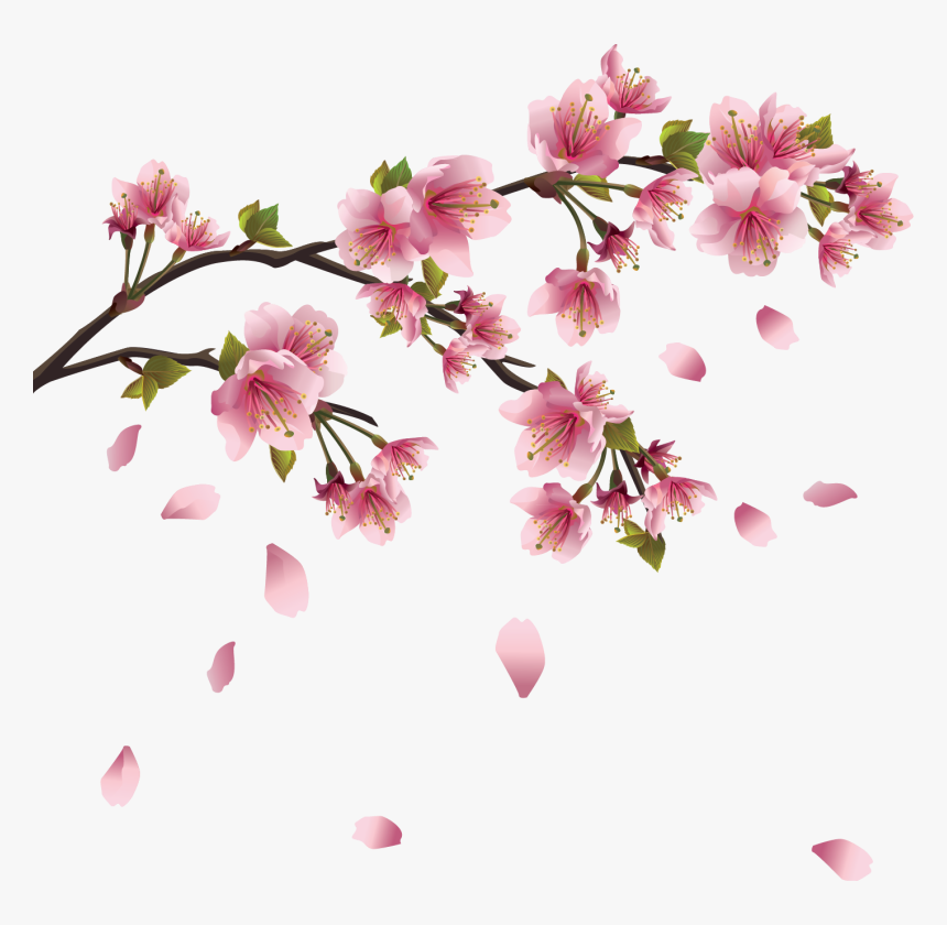 Fleurs Png - Sakura Flower Drawing, Transparent Png , Transparent Png Image - PNGitem