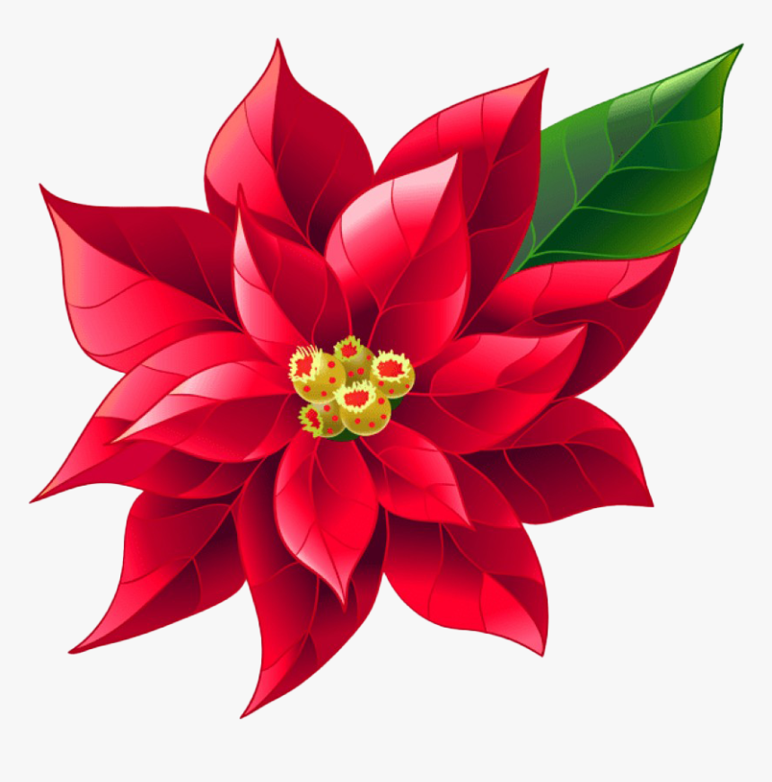 Poinsettias clipart vector, Poinsettias vector Transparent FREE for  download on WebStockReview 2021