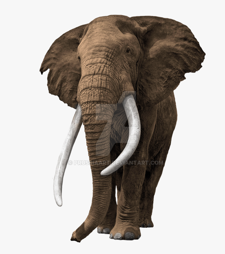 Elephant Transparent Background Prussiaart Old African Bull Elephant Hd Png Download Transparent Png Image Pngitem Search more hd transparent background image on kindpng. old african bull elephant hd png