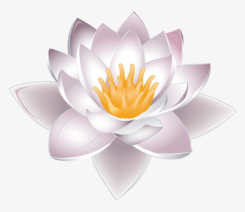 Nelumbo Nucifera Water Lily Clip Art Aquatic Plants Drawing Water Lily Hd Png Download Transparent Png Image Pngitem