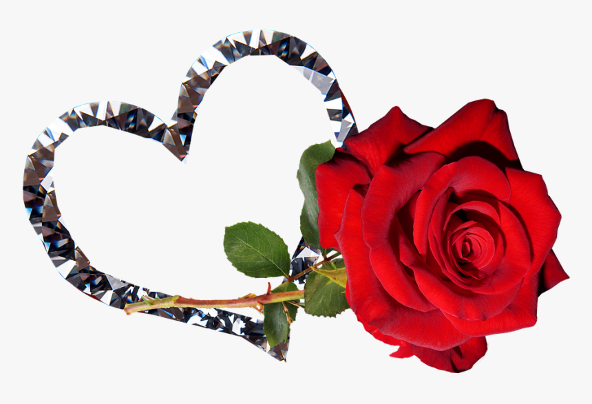 Rose Red Flower Valentine Romantic Good Night Tamil Heart Hd Png Download Transparent Png Image Pngitem