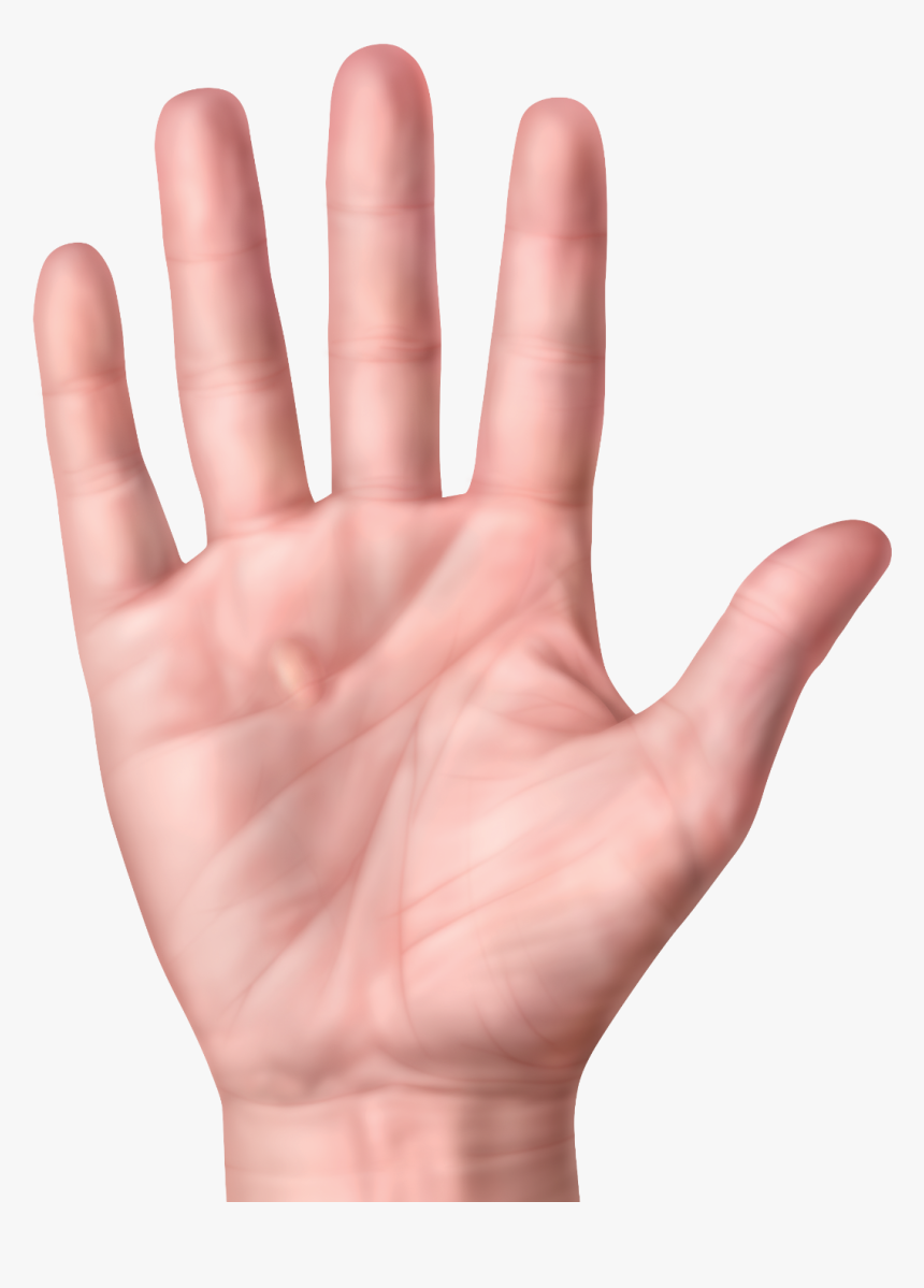 Nodule Or Lump In Palm Palm Hand Hd Png Download Transparent Png Image Pngitem Over 29 hand palm png images are found on vippng. nodule or lump in palm palm hand hd