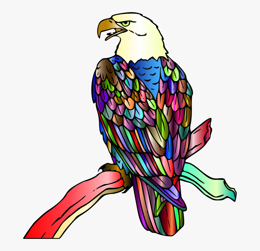- Eagle,falconiformes,kite - Bald Eagle Coloring Page, HD Png Download ,  Transparent Png Image - PNGitem