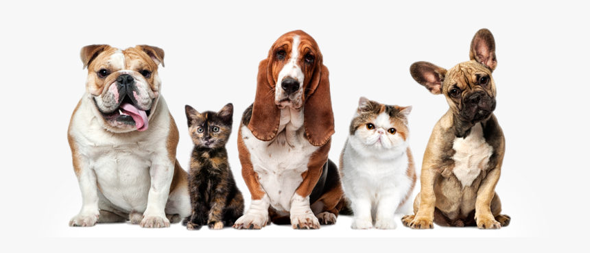 Dogs And Cats Pets Hd Png Download Transparent Png Image Pngitem