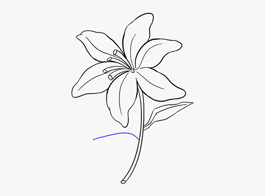 Drawing Tigers Lilies Lily Flower Drawing Easy Hd Png Download Transparent Png Image Pngitem