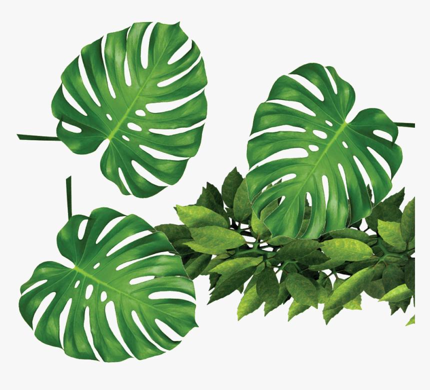 Tropical Leaf Transparent Background Hd Png Download Transparent Png Image Pngitem Itupun sebenarnya banyak yang ngga terekam. tropical leaf transparent background