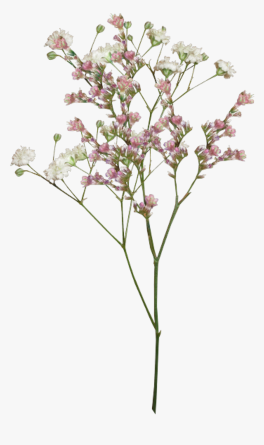 Dryflowers Flowers Flores Aesthetic Tumblr Png Aesthetic