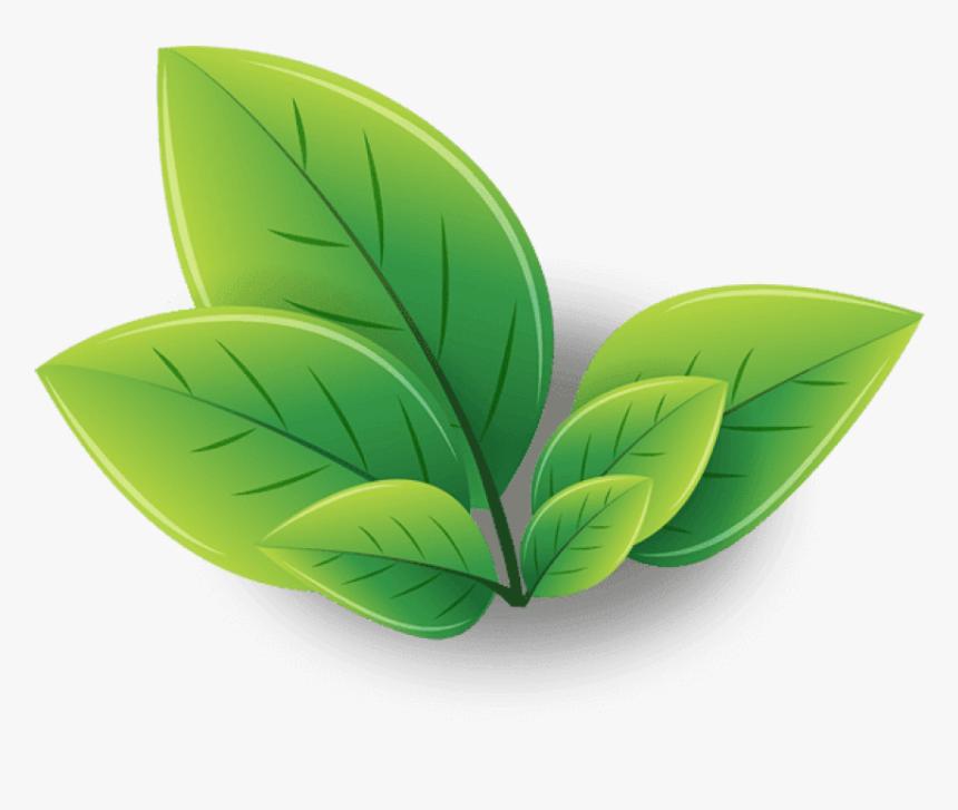 Green Tea Png Transparent Images Logo Green Tea Leaves Png Download Transparent Png Image Pngitem