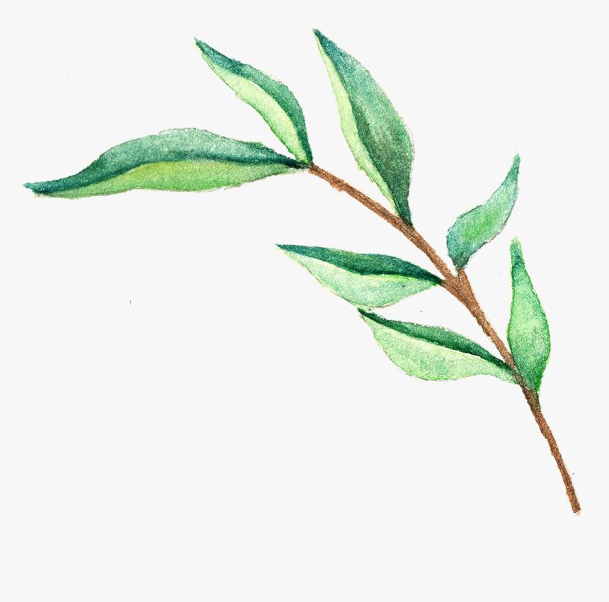 Green Tea Leaves Png Transparent Png Transparent Png Image Pngitem