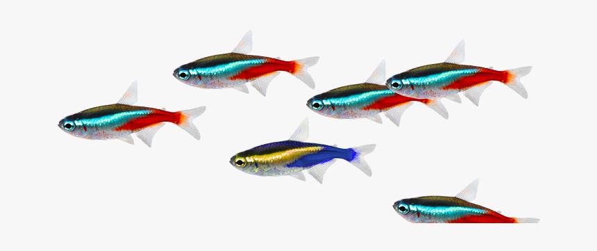 Fish Image School Of Fish Transparent Background Hd Png Download Transparent Png Image Pngitem