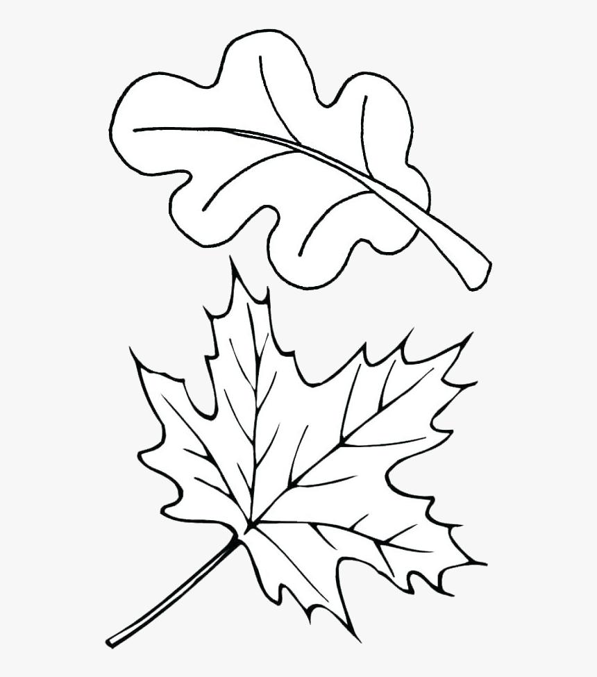 - Leaf Outline Autumn Outlines Fall Clip Art Transparent - Fall