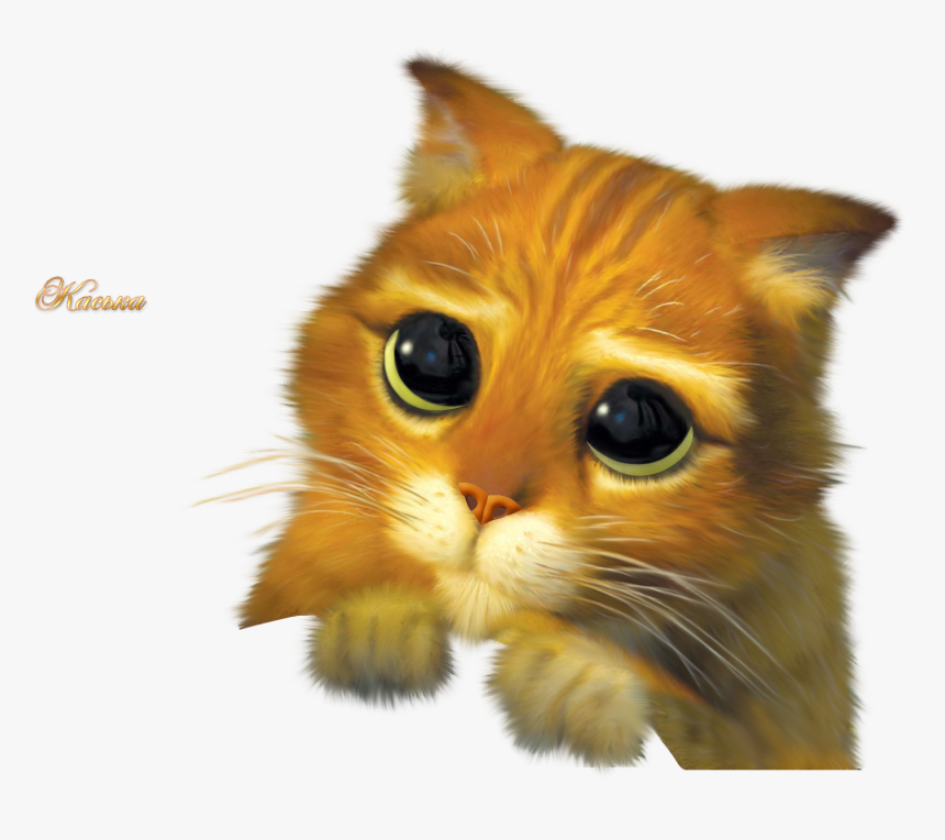 Puss In Boots Cat Donkey Shrek The Musical Please Share My Post Hd Png Download Transparent Png Image Pngitem
