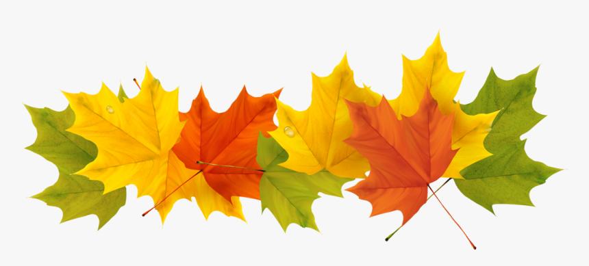Transparent Fall Leaf Clipart No Background - Transparent Background Fall Leaves Png, Png Download , Transparent Png Image - PNGitem