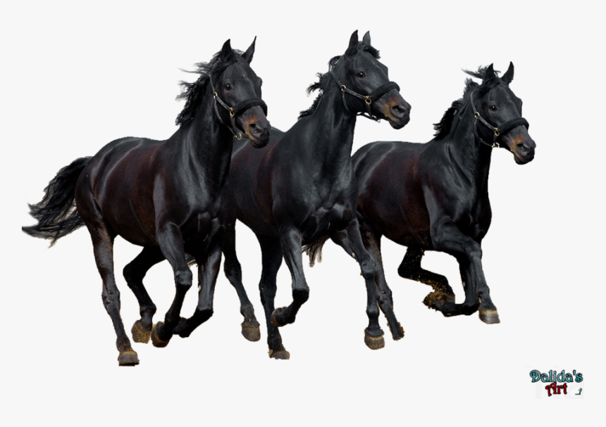 Transparent Horse Png Horse Hd Wallpapers 1080p Png Download