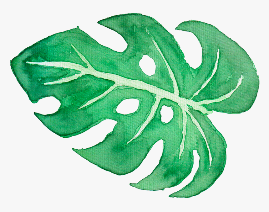 Tropical Clipart Tropical Leave Palm Leaves Watercolor Png Transparent Png Transparent Png Image Pngitem Free vectors for your nature, plants, palm trees, evergreen plants, exotic flora and tropical places visuals. palm leaves watercolor png transparent